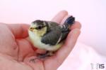 oiseau dans la main.JPG