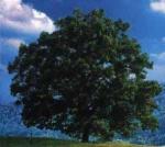 arbre été.jpg