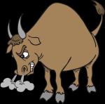colère-taureau.png