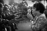 Fleur au fusil. jpeg.JPG