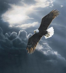 aigle en vol 3.jpg