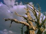 arbre mort.png