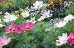 fleurs champs.jpg